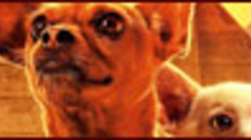 Affiche en français du film Le chihuahua de Beverly Hills