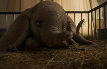 Box-office québécois : Dumbo vole jusqu'au premier rang